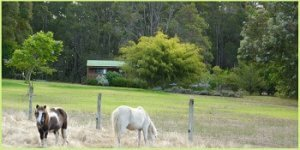 My review of a Pemberton farm stay at Diamond Forest Cottages in the Southern forests region of Western Austalia