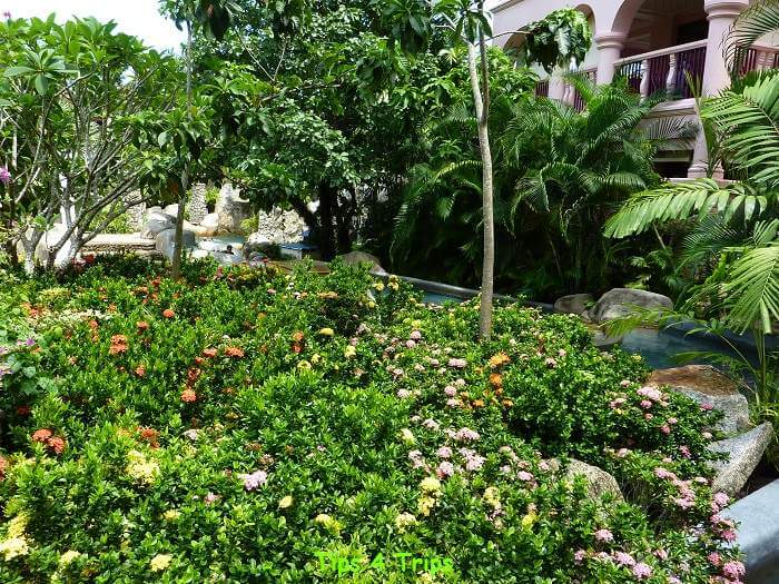 flowers in garden at Centara Grand Phuket